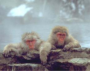 Japan travel destinations - Nagano