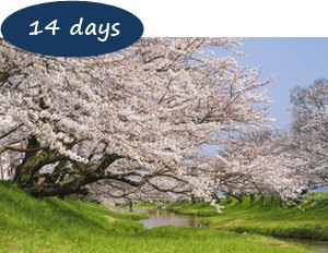 Japan Cherry Blossom Holiday Packages - Hidden Cherry Blossom Northern Japan 14 Days – Tohoku