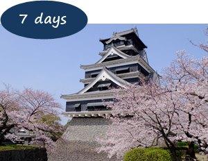 Cherry blossom Kyushu 7 days
