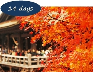 Japan Autumn Leaves Holiday Packages - Autumn Leaves Japan 14 days