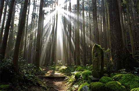 pilgrimage-walk-kumano-kodo-9-days-image