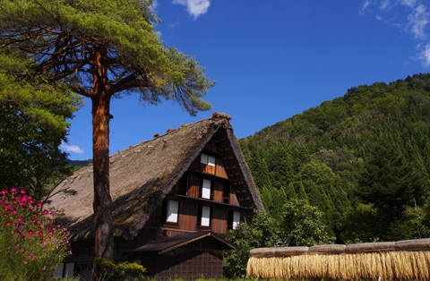 Shirakawago and Gokayama bus tour