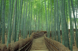 Kyoto Private Cycling Tours - The Kyoto West – The World Heritage Tour