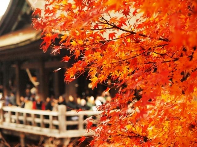 Autumn Leaves Japan 14 days